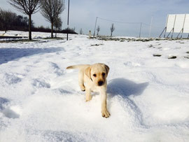 Schneehase :)