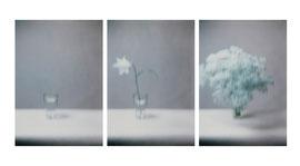 Blume 3, 4, 2, Füssen 2006
