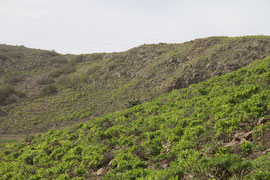 Auf dem Weg von Haria zum Mirador del Bosquecillo