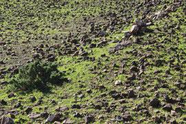 Achajes Gebirge (Rund um den Pico Rodondo)