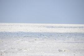 ウトロの流氷