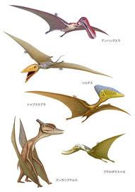 ポプラ社 WONDA恐竜 イラスト