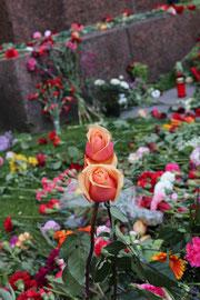 Rasen bedeckt mit nieder gelegten Blumen am 9. Mai. Sowjetisches Ehrenmal Berlin. Foto: Helga Karl