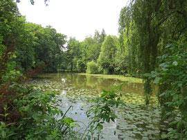Blick vom Uferbereich des Grundstücks auf den Ebensee