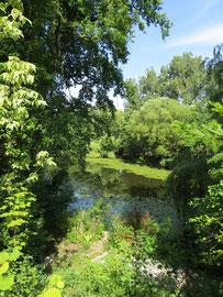 Blick auf den Uferbereich des Grundstücks und den Ebensee
