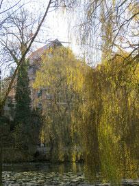 Blick vom gegenüberliegenden Seeufer auf das von Weiden verdeckte Haus