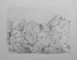 Joshua Tree (51x40cm)