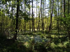 Moor im Biesenthaler Becken