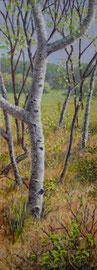 Berken, voorjaar, 5, o/a/p, 44x122cm