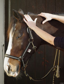 Massage équin de la nuque