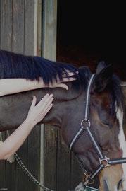 Massages du cheval