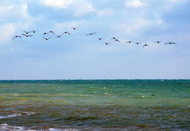 A flock of unidentified seabirds