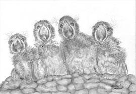 Schwalben, 2010, Bleistiftzeichnung