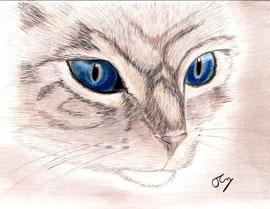 """Auftragsbild """"Katzenportrait für Verena"""""""