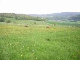 Die riesigen Wiesen für die Pferde