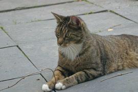 Henri war ein Sonnenschein und trotz seiner drei Beine topfit. Leider ist er über die Regenbogenbrücke gegangenn