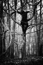 neun ganze nächte | 201503  • www.visovio.de • | havamal, runatal