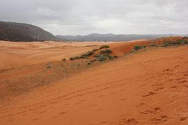 Pink Sand Dunes State Park