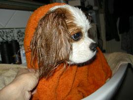 asciugatura...