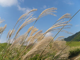 お昼からはススキが見頃の曽爾高原へ。