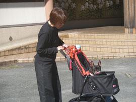 はじめまして!  『よもぎ』と申します。   先日いただいた連休に、三重県松坂の「わんわんパラダイスホテル」へ行ってまいりました。    二日目の朝、ホテル内のドッグランへ。移動はもちろん愛車で???