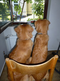 Ein Stuhl ist eine Einladung für einen Blick aus dem Fenster!