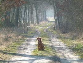 Spaziergänge werden trotzdem sehr genossen!