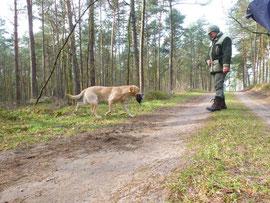 Frei Verlorensuche im Wald