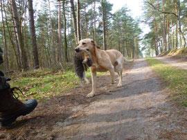 Immer auch ein Auge darauf haben, dass der Hund das Wild korrekt abgibt
