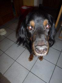 Der treue, alte Rudi - gibt´s etwas leckeres in der Küche?