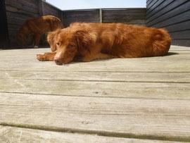 Auf der Terasse kann man wunderbar relaxen! Nita immer gerne voll in der Sonne.