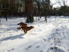 Toller in Action