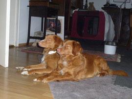 Nur noch unter strengster Beobachtung können die Hunde zusammen sein.