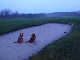 Aber Hundepfoten sind nicht gerne gesehen! Die Harke zum Spuren verwischen liegt schon bereit