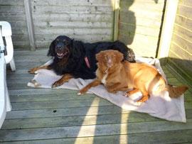 Rudi und Nita teilen sich gerne mal eine Decke.