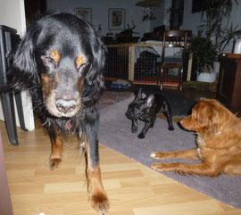 Rudi flüchtet lieber. Ari liebt seinen Schwanz und wenn sie nicht dran kommt, versucht sie die Beine