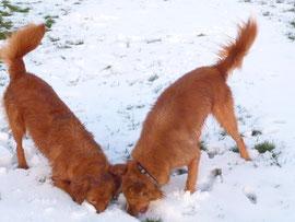 Da gibt es etwas zu riechen unter dem Schnee...
