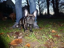 Kleines Mädchen mit großen Ohren