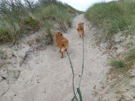 Der erste Gang über die Dünen zum Wasser nach der Ankunft.