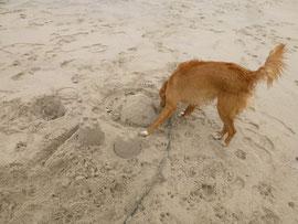 Eine kleine Sandburg wird ausgiebig untersucht