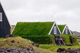 Grasnabenhäuser in Olafsvik