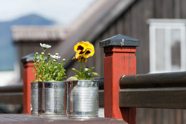 Blumenschmuck in Höfn