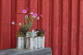 Blumenschmuck in Höfn 2