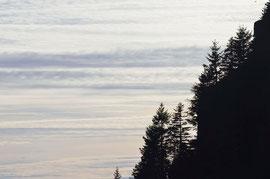 Pini in silhoutte con un cielo fantastico