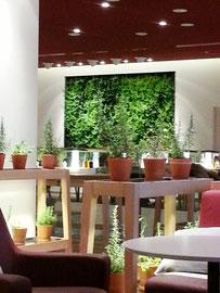Grüne Wände Entspannungsoasen