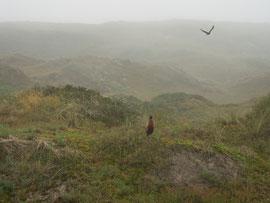 Die Dünenlandschaft vor unserer Ferienwohnung