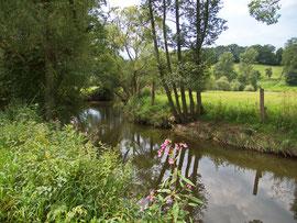 Die Haune bei Müsenbach