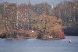 Der Reihernistbaum steht auf einer kleinen Insel