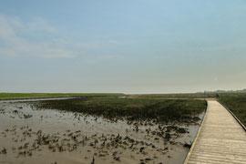 Steg durch den Langwarder Groden bei Niedrigwasser