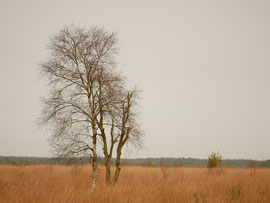 Im Rhedener Geestmoor